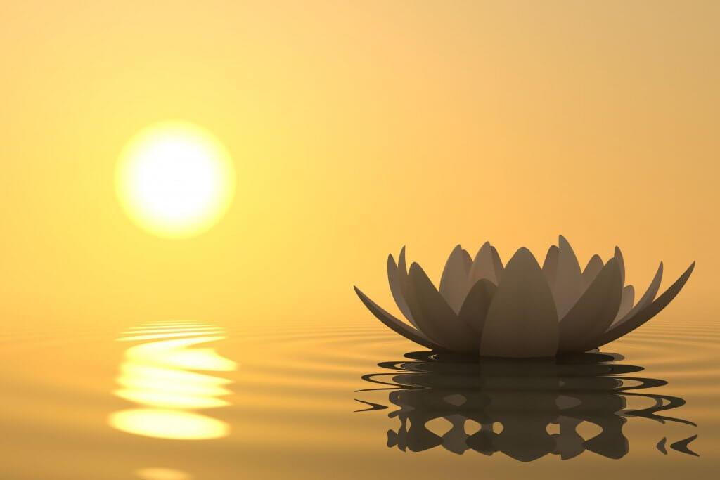 flor-sobre-agua
