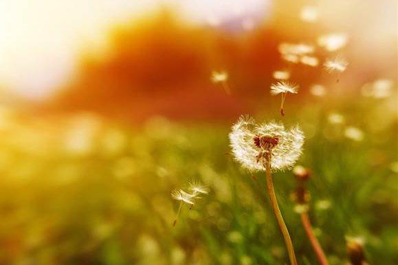 Cómo encontrar el camino hacia nuestros auténticos deseos