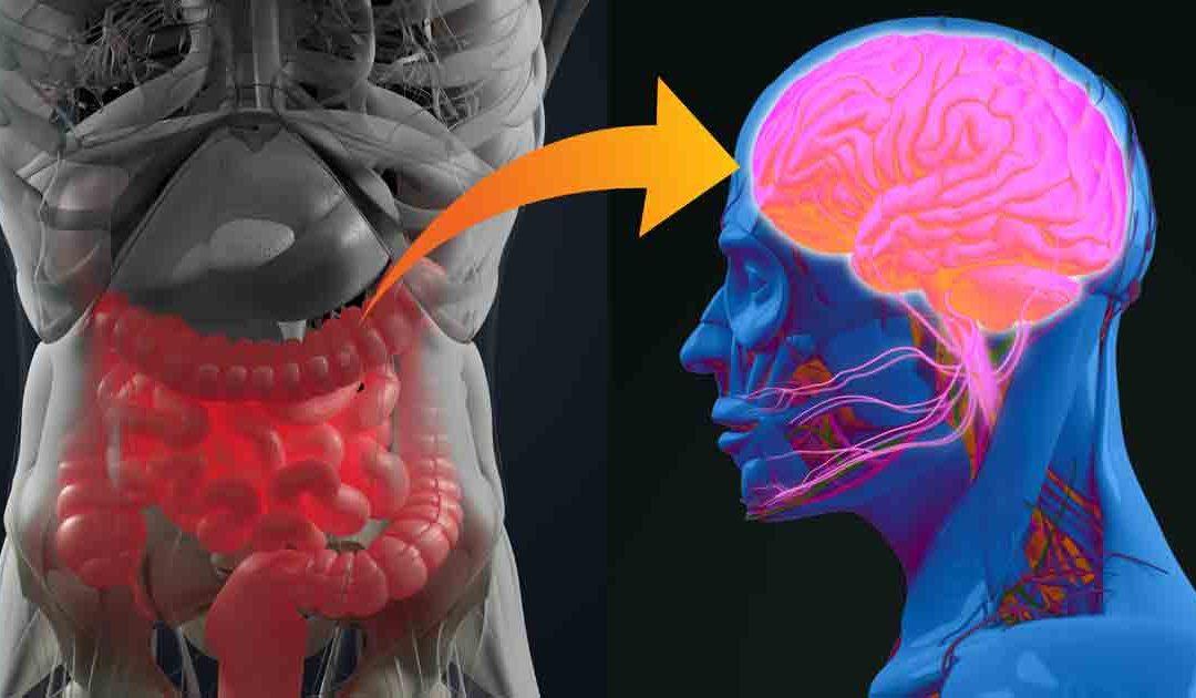 El Intestino podría ser su segundo cerebro